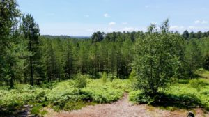 Moors Valley Country Park view over forest