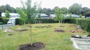 New trees in a garden