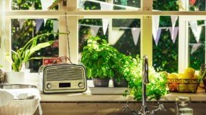 Classic radio on kitchen window sill with plants around it